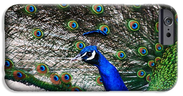Peacock iPhone Cases - Proud Peacock iPhone Case by Sheryl Cox