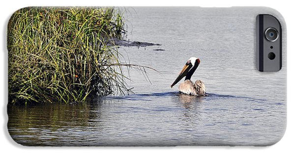Tidal Creek iPhone Cases - Proud Pelican iPhone Case by Al Powell Photography USA