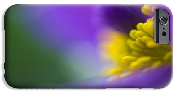Close-up Photographs iPhone Cases - Pulsatilla iPhone Case by Silke Magino