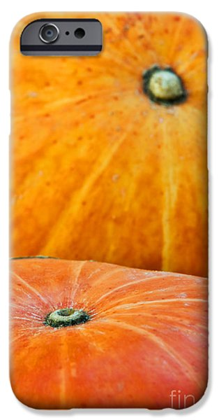 Biologic iPhone Cases - Pumpkins background iPhone Case by Carlos Caetano