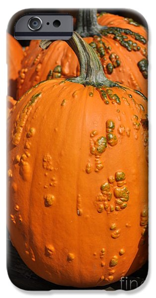 Farm Stand Photographs iPhone Cases - Pumpkinville iPhone Case by Luke Moore
