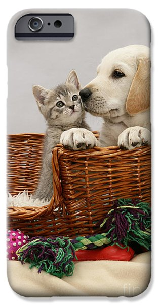 Mixed Labrador Retriever iPhone Cases - Pup And Kitten In Basket iPhone Case by Jane Burton
