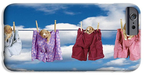 Boxer iPhone Cases - Puppies Hanging Out iPhone Case by Darwin Wiggett