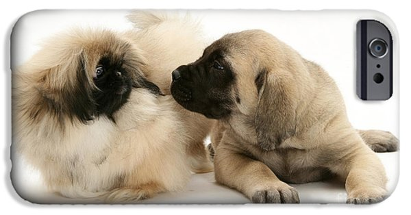 Pekingese iPhone Cases - Puppies iPhone Case by Jane Burton