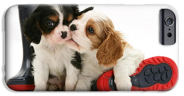 Spaniel Puppy iPhone Cases - Puppies With Rain Boots iPhone Case by Jane Burton