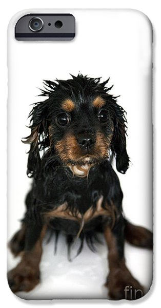 Puppy bathtime iPhone Case by Jane Rix