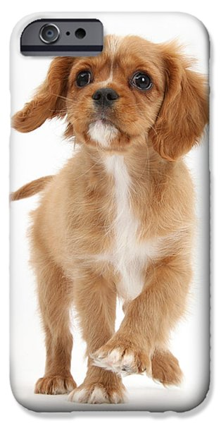 Dog Trots Photographs iPhone Cases - Puppy Trotting Foward iPhone Case by Mark Taylor