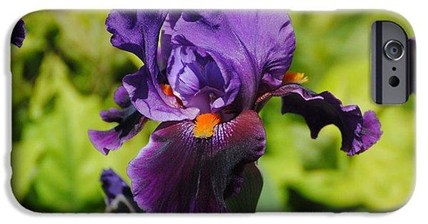 Purple And Orange Iris Flower iPhone Case by Jai Johnson