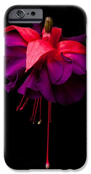 Purple and Pink Beauty iPhone Case by Dawn OConnor