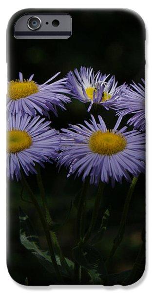 Purple Asters iPhone Case by Ernie Echols