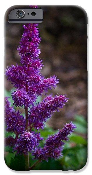 Spirea iPhone Cases - Purple astilbe Bloom 1 iPhone Case by Douglas Barnett
