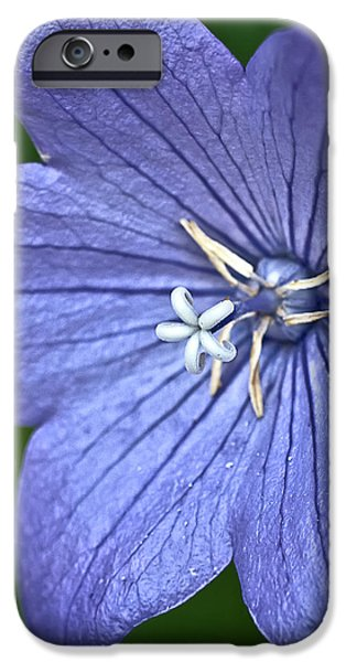 Purple Balloon Flower iPhone Case by  onyonet  photo studios