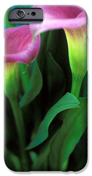 Purple Calla Duet iPhone Case by Kathy Yates