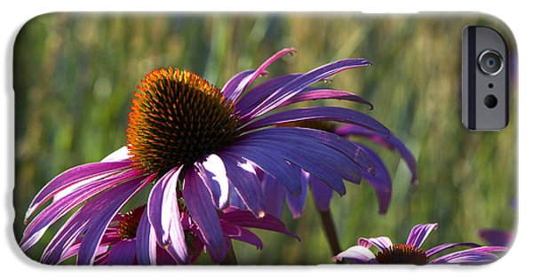 Flu iPhone Cases - Purple Cone Flower backlit iPhone Case by Sharon  Talson