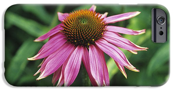 Kim Photographs iPhone Cases - Purple Coneflower iPhone Case by Duncan Smith