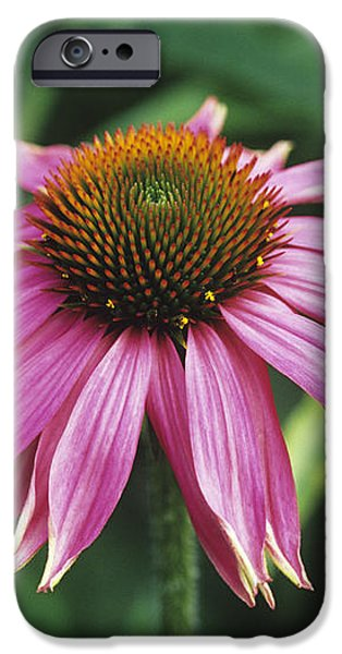 Purple Coneflower iPhone Case by Duncan Smith