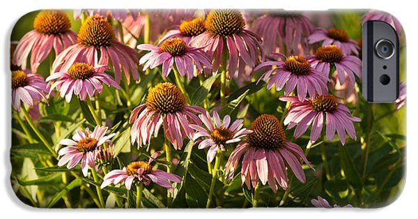 Prairie iPhone Cases - Purple Coneflower iPhone Case by Steve Gadomski