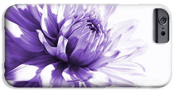 Monotone iPhone Cases - Purple Dahlia Floral iPhone Case by Jennie Marie Schell