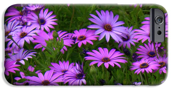 Purple And Green iPhone Cases - Purple Daisies Square iPhone Case by Carol Groenen