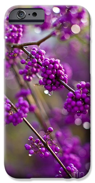 Olympus iPhone Cases - Purple Drops iPhone Case by Mike Reid