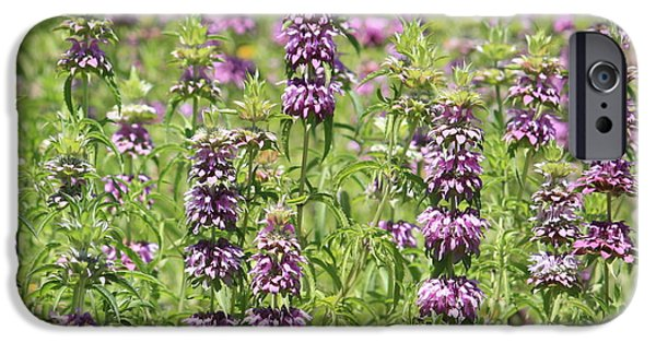 Purple And Green iPhone Cases - Purple Flower Field iPhone Case by Carol Groenen