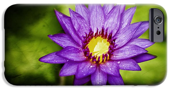 Water Lilly iPhone Cases - Purple Sunrise iPhone Case by Scott Pellegrin