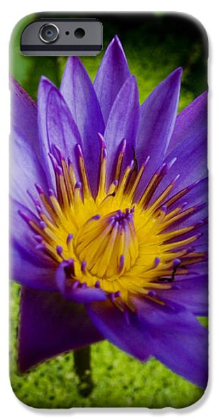 Purple Water Lily iPhone Case by Ray Laskowitz - Printscapes