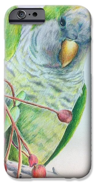 Quaker Drawings iPhone Cases - Quaker iPhone Case by Norma Gafford