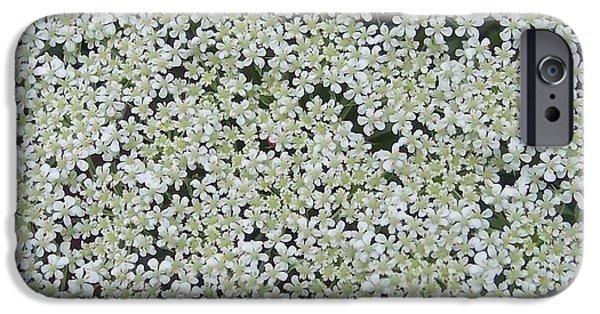 Anna Villarreal Garbis iPhone Cases - Queen Annes lace II iPhone Case by Anna Villarreal Garbis