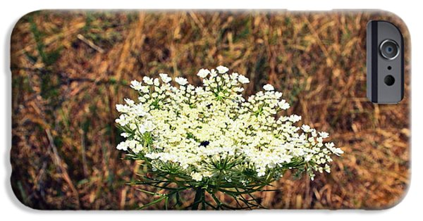 Michelle Photographs iPhone Cases - Queen Annes Lace on the Beach iPhone Case by Michelle Calkins