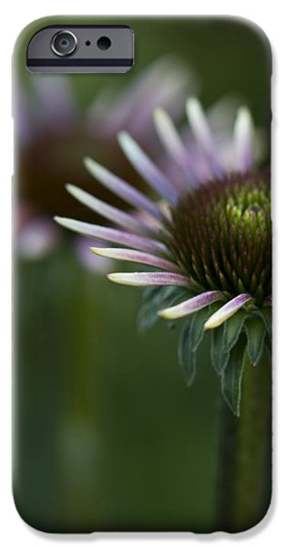 Cone Flowers iPhone Cases - Queen iPhone Case by Rebecca Cozart