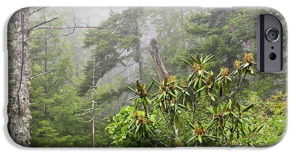 Fog Mist iPhone Cases - Quiet Morning Cranberry Glades iPhone Case by Thomas R Fletcher