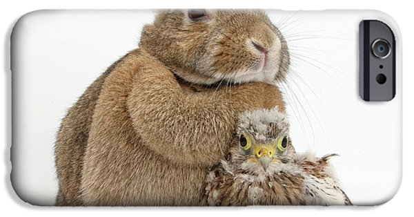 Falcon iPhone Cases - Rabbit And Kestrel Chick iPhone Case by Mark Taylor