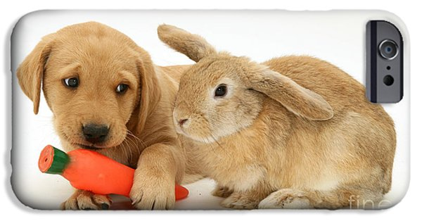 Mixed Labrador Retriever iPhone Cases - Rabbit Watches Pup With Carrot Squeaky iPhone Case by Jane Burton
