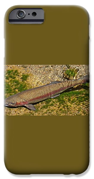 Rainbow Trout iPhone Case by Nick Kloepping