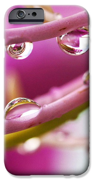 Raindrops iPhone Case by Marilyn Hunt