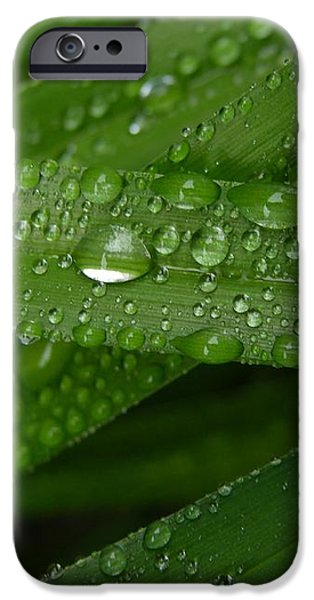 Raindrops on Green Leaves iPhone Case by Carol Groenen