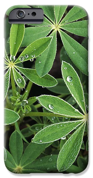 Raindrops on Lupine iPhone Case by Greg Vaughn - Printscapes