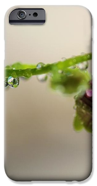 Raindrops on Orchid Buds iPhone Case by Theresa Willingham