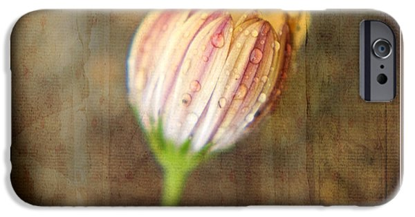 Wet Petals iPhone Cases - Rainy Day Daisy iPhone Case by Bonnie Bruno