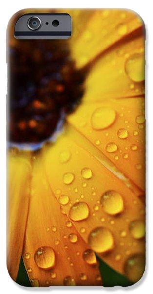 Rainy Day Daisy iPhone Case by Thomas R Fletcher
