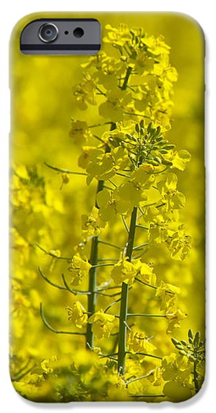 Germany iPhone Cases - Rapeseed Blossoms iPhone Case by Melanie Viola