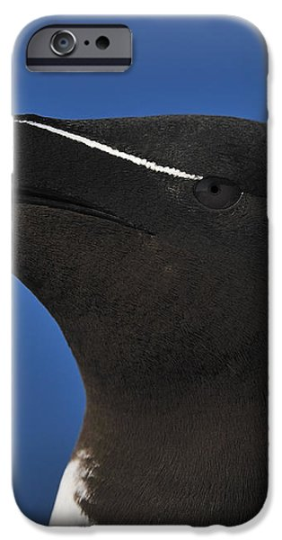 Razorbill Portrait iPhone Case by Tony Beck