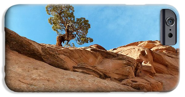 Slickrock iPhone Cases - Reaching for the Sun iPhone Case by Bob and Nancy Kendrick