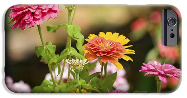Zinnias iPhone Cases - Reaching for the Sun iPhone Case by Rich Franco