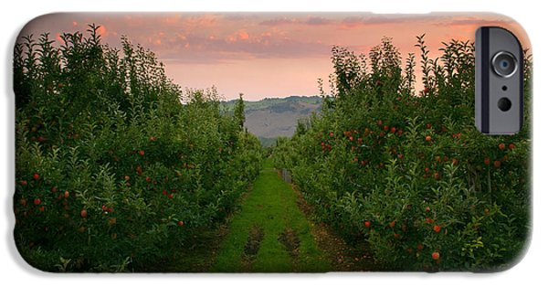 Yakima Valley iPhone Cases - Red Apple Sunset iPhone Case by Mike  Dawson