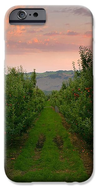 Red Apple Sunset iPhone Case by Mike  Dawson