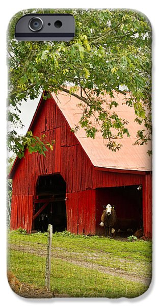 Tennessee Hay Bales iPhone Cases - Red Barn with Pink Roof iPhone Case by Douglas Barnett