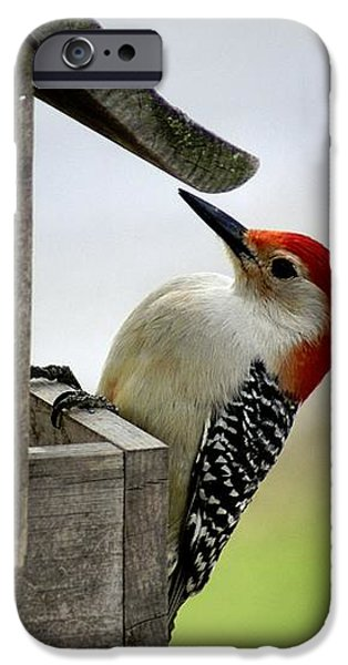 Red Bellied Woodpecker iPhone Case by L Granville Laird