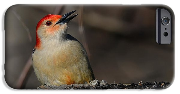 Woodpecker iPhone Cases - Red-Bellied Woodpecker iPhone Case by Lois Bryan